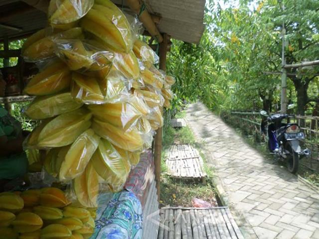 Agro Wisata Belimbing, Tempat Wisata yang Asyik di Bojonegoro